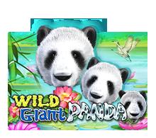 ทดลองเล่นสล็อต wildgiantpanda
